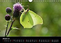 Schmetterlinge in Deutschland (Wandkalender 2019 DIN A4 quer) - Produktdetailbild 1