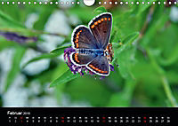 Schmetterlinge in Deutschland (Wandkalender 2019 DIN A4 quer) - Produktdetailbild 2