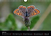 Schmetterlinge in Deutschland (Wandkalender 2019 DIN A4 quer) - Produktdetailbild 7