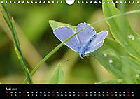Schmetterlinge in Deutschland (Wandkalender 2019 DIN A4 quer) - Produktdetailbild 5