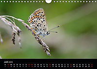 Schmetterlinge in Deutschland (Wandkalender 2019 DIN A4 quer) - Produktdetailbild 6