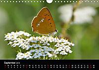 Schmetterlinge in Deutschland (Wandkalender 2019 DIN A4 quer) - Produktdetailbild 9