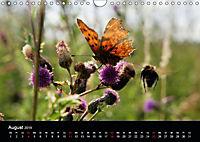 Schmetterlinge in Deutschland (Wandkalender 2019 DIN A4 quer) - Produktdetailbild 8