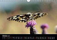 Schmetterlinge in Deutschland (Wandkalender 2019 DIN A4 quer) - Produktdetailbild 10