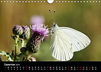 Schmetterlinge in Deutschland (Wandkalender 2019 DIN A4 quer) - Produktdetailbild 12