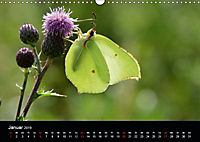 Schmetterlinge in Deutschland (Wandkalender 2019 DIN A3 quer) - Produktdetailbild 1