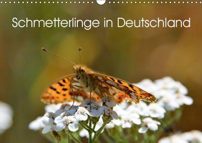Schmetterlinge in Deutschland (Wandkalender 2019 DIN A3 quer), Thomas Freiberg