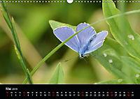 Schmetterlinge in Deutschland (Wandkalender 2019 DIN A3 quer) - Produktdetailbild 5
