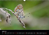 Schmetterlinge in Deutschland (Wandkalender 2019 DIN A3 quer) - Produktdetailbild 6