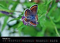 Schmetterlinge in Deutschland (Wandkalender 2019 DIN A3 quer) - Produktdetailbild 2