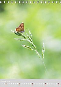 Schmetterlinge - Schönheiten der Wiesen (Tischkalender 2019 DIN A5 hoch) - Produktdetailbild 3