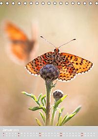 Schmetterlinge - Schönheiten der Wiesen (Tischkalender 2019 DIN A5 hoch) - Produktdetailbild 1