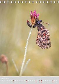 Schmetterlinge - Schönheiten der Wiesen (Tischkalender 2019 DIN A5 hoch) - Produktdetailbild 4