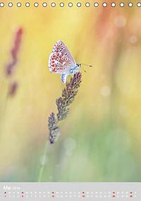 Schmetterlinge - Schönheiten der Wiesen (Tischkalender 2019 DIN A5 hoch) - Produktdetailbild 5