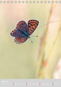 Schmetterlinge - Schönheiten der Wiesen (Tischkalender 2019 DIN A5 hoch) - Produktdetailbild 7