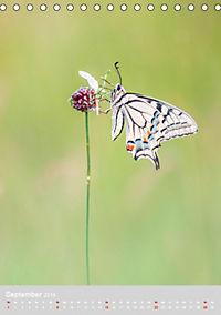 Schmetterlinge - Schönheiten der Wiesen (Tischkalender 2019 DIN A5 hoch) - Produktdetailbild 9