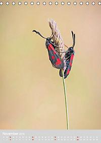 Schmetterlinge - Schönheiten der Wiesen (Tischkalender 2019 DIN A5 hoch) - Produktdetailbild 11