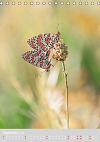Schmetterlinge - Schönheiten der Wiesen (Tischkalender 2019 DIN A5 hoch) - Produktdetailbild 12