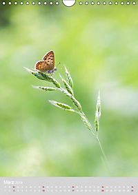 Schmetterlinge - Schönheiten der Wiesen (Wandkalender 2019 DIN A4 hoch) - Produktdetailbild 3