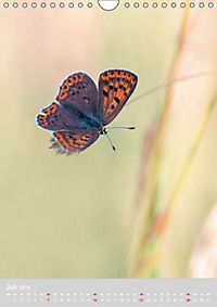 Schmetterlinge - Schönheiten der Wiesen (Wandkalender 2019 DIN A4 hoch) - Produktdetailbild 7