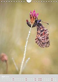 Schmetterlinge - Schönheiten der Wiesen (Wandkalender 2019 DIN A4 hoch) - Produktdetailbild 4