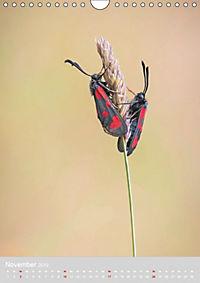 Schmetterlinge - Schönheiten der Wiesen (Wandkalender 2019 DIN A4 hoch) - Produktdetailbild 11