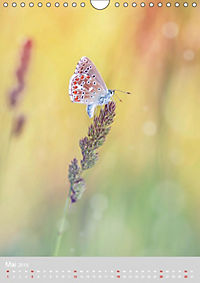 Schmetterlinge - Schönheiten der Wiesen (Wandkalender 2019 DIN A4 hoch) - Produktdetailbild 5