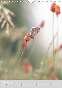 Schmetterlinge - Schönheiten der Wiesen (Wandkalender 2019 DIN A4 hoch) - Produktdetailbild 2