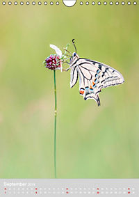 Schmetterlinge - Schönheiten der Wiesen (Wandkalender 2019 DIN A4 hoch) - Produktdetailbild 9