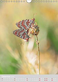 Schmetterlinge - Schönheiten der Wiesen (Wandkalender 2019 DIN A4 hoch) - Produktdetailbild 12