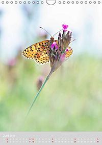 Schmetterlinge - Schönheiten der Wiesen (Wandkalender 2019 DIN A4 hoch) - Produktdetailbild 6