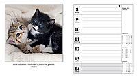 Schmusekatzen Fotokalender 2018 - Produktdetailbild 1