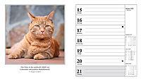 Schmusekatzen Fotokalender 2018 - Produktdetailbild 2