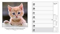 Schmusekatzen Fotokalender 2018 - Produktdetailbild 3
