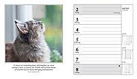 Schmusekatzen Fotokalender 2018 - Produktdetailbild 4
