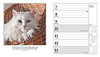 Schmusekatzen Fotokalender 2018 - Produktdetailbild 5