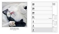Schmusekatzen Fotokalender 2018 - Produktdetailbild 6