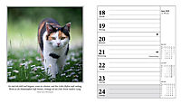 Schmusekatzen Fotokalender 2018 - Produktdetailbild 7