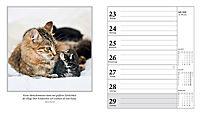Schmusekatzen Fotokalender 2018 - Produktdetailbild 9