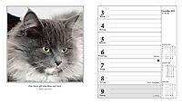 Schmusekatzen Fotokalender 2018 - Produktdetailbild 11