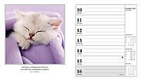 Schmusekatzen Fotokalender 2018 - Produktdetailbild 12