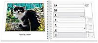 Schmusekatzen Fotokalender 2019 - Produktdetailbild 1