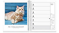 Schmusekatzen Fotokalender 2019 - Produktdetailbild 2