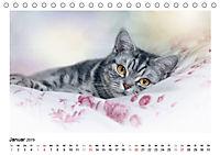 Schmusige Britisch Kurzhaar (Tischkalender 2019 DIN A5 quer) - Produktdetailbild 1