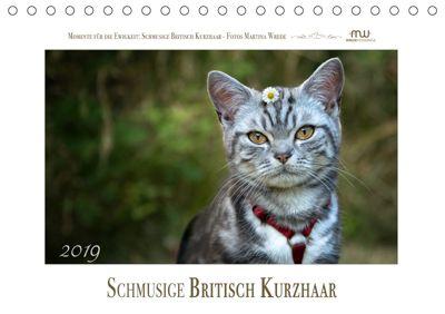 Schmusige Britisch Kurzhaar (Tischkalender 2019 DIN A5 quer), Martina Wrede