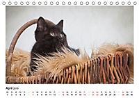 Schmusige Britisch Kurzhaar (Tischkalender 2019 DIN A5 quer) - Produktdetailbild 4