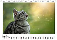 Schmusige Britisch Kurzhaar (Tischkalender 2019 DIN A5 quer) - Produktdetailbild 8