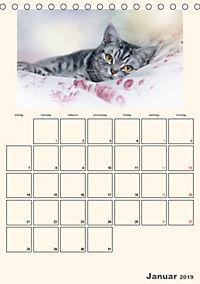 Schmusige Britisch Kurzhaar (Tischkalender 2019 DIN A5 hoch) - Produktdetailbild 1