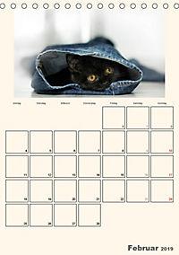 Schmusige Britisch Kurzhaar (Tischkalender 2019 DIN A5 hoch) - Produktdetailbild 2