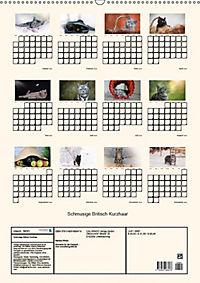 Schmusige Britisch Kurzhaar (Wandkalender 2019 DIN A2 hoch) - Produktdetailbild 13